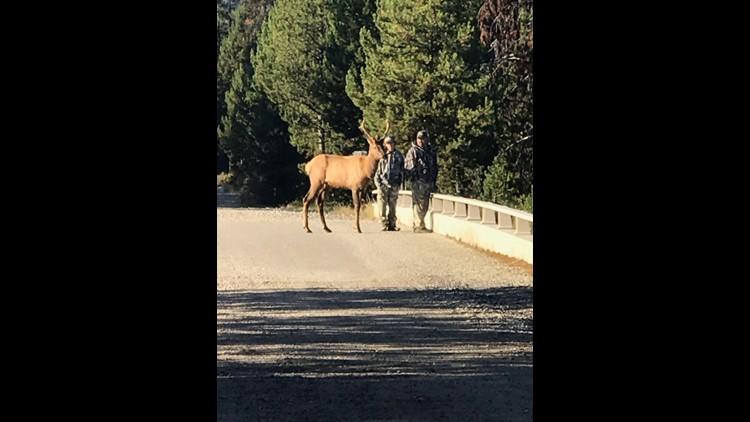 Elliot the Elk