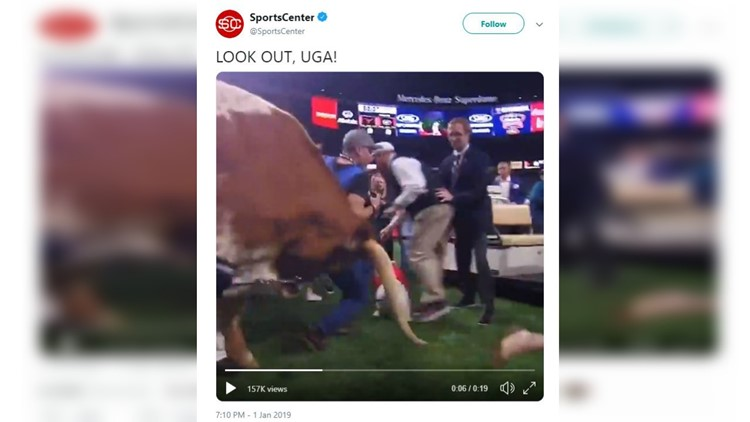 PETA calls to end usage of live animal mascots after Bevo charges during Sugar Bowl