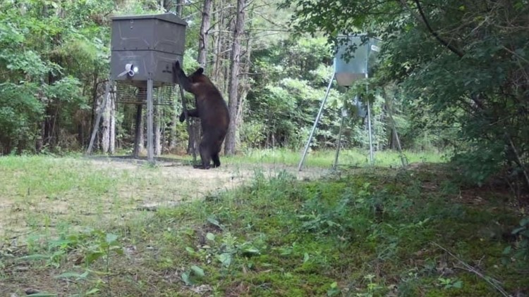 Numerous black bears sightings reported in East Texas