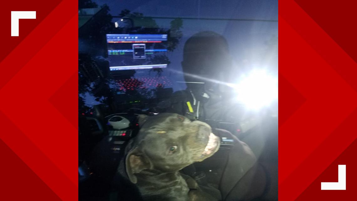 Pitbull hijacks Kilgore police vehicle, eats officer's beef jerky