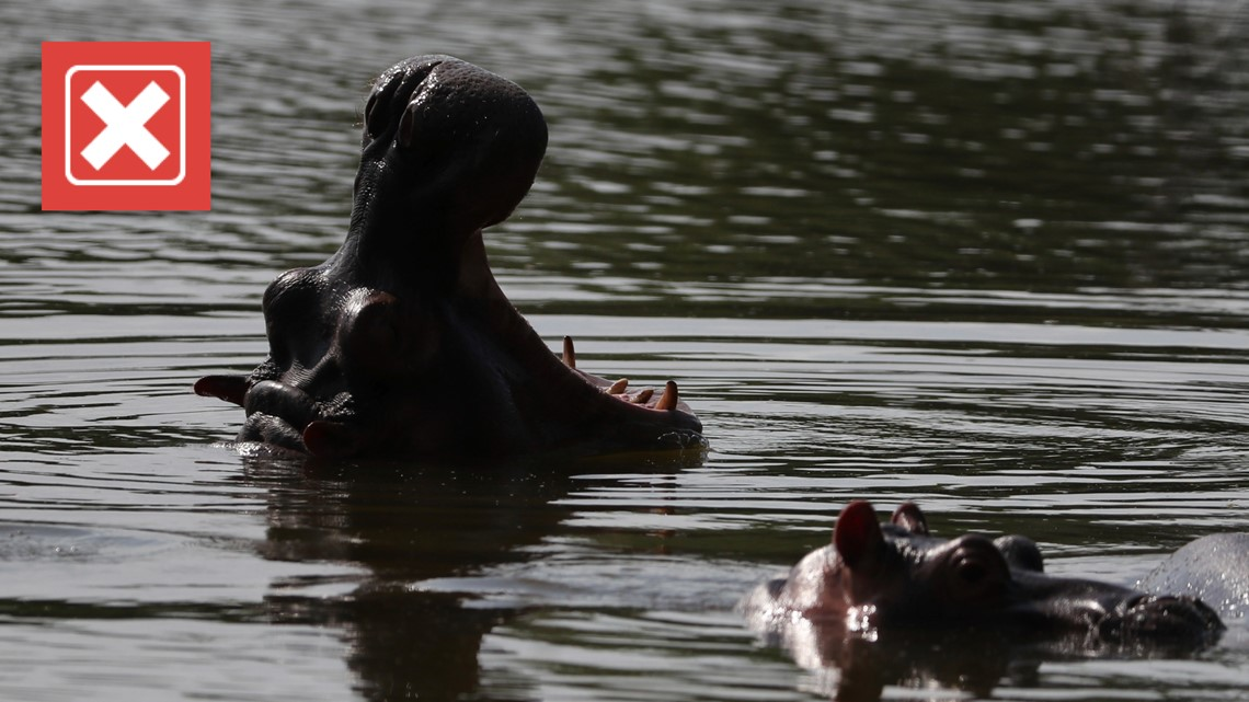 No, hippos are not the deadliest animal in the world