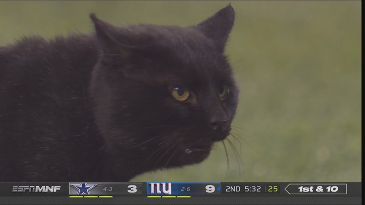Black cat on field at Cowboys game