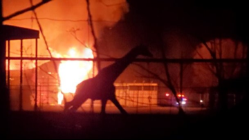 'We are devastated'   Giraffes among 10 animals killed in barn fire at Ohio wildlife park