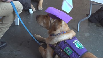 'I didn't see a future for myself:'  Assistance dog graduation brings 'life changing' benefits to those with disabilities