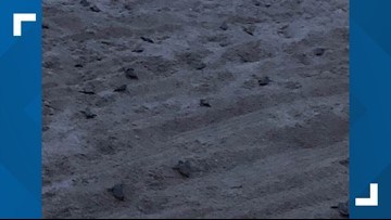 Watch: Sea turtle hatchlings upstage Florida beach fireworks show