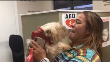 Yorkie reunited with owner in Tampa after disappearing 3 years ago in New Jersey