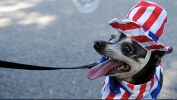 Here's how to protect pets from Fourth of July fireworks