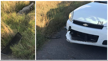 8-foot-alligator bites off piece of deputy's patrol car